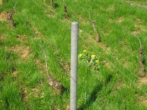 piquet en matière recyclé piquets pieux palissage viticole arboricole