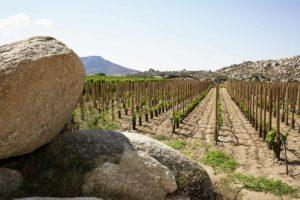 tuteurs octowood sur l'île grecque de tinos
